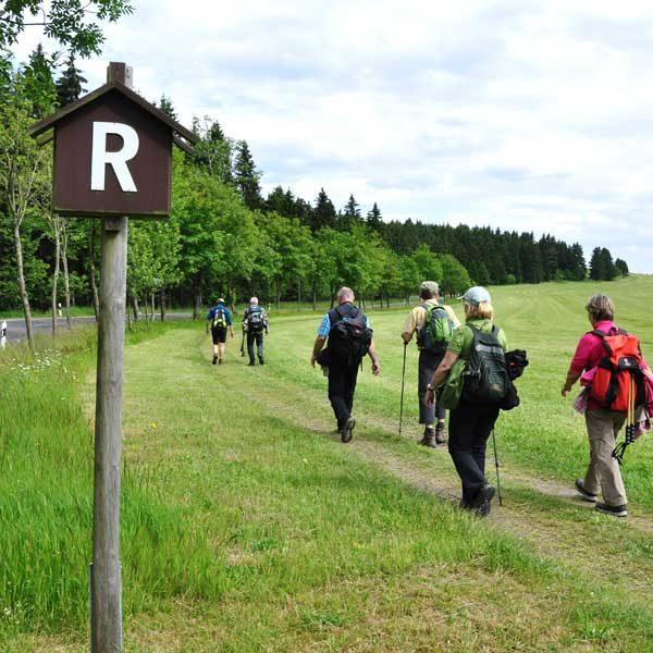 Wanderer - Alpakas am Rennsteig, Thüringer Wald
